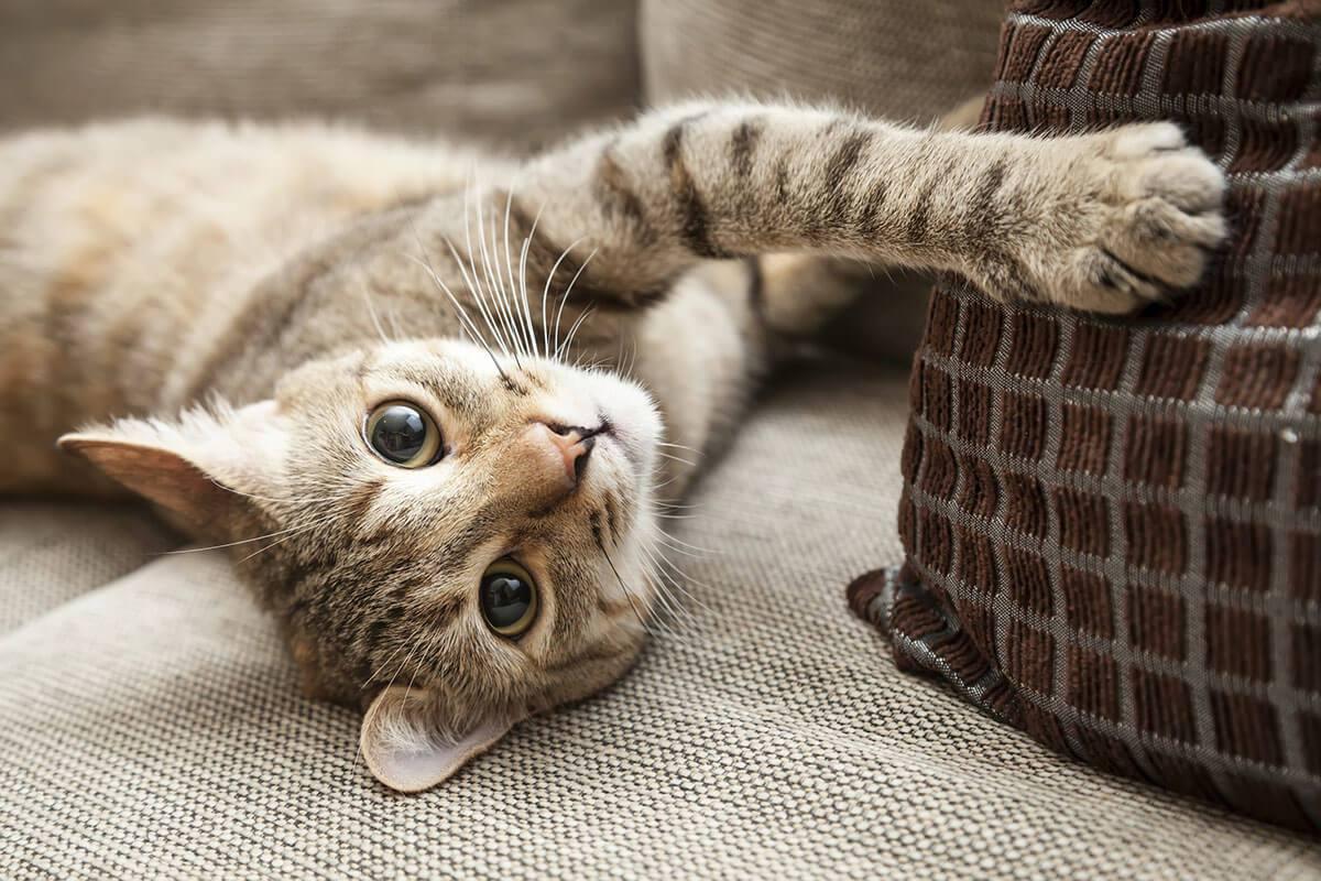 """Come difendere il divano dal vostro gatto? Consigli per evitare che il sofà diventi un """"tiragraffi"""""""